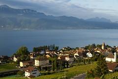 Q-li (Riex) Tags: summer lake landscape switzerland vineyard village suisse lac leman paysage vignoble cully ete a100 amount vaud lavaux sal1680z minoltaamount carlzeisssonyf35451680mm variosonnartdt35451680