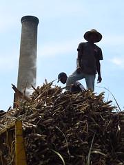 026 (alexandre.vingtier) Tags: haiti rum caphaitien nazon clairin rhumagricole distillerielarue