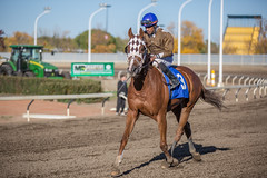 Alberta Breeders Fall Classic 2014 - Horse Racing (IQRemix) Tags: horse sport race caballo cheval edmonton racing alberta jockey horseracing derby thoroughbred park   northlands yeg northlands