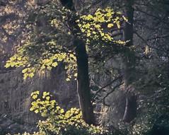 Enchantment (Dazzygidds) Tags: beautifullight sunrays wollatonpark wollaton sunbeams backlitbeauties