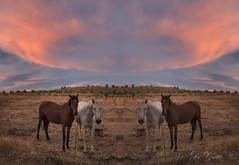 Four Horses (Di Gutti (diegogutierrez79@gmail.com)) Tags: sunset sky horse cloud naturaleza sunlight nature animal skyline clouds canon caballo atardecer sevilla seville andalucia hills nubes animales andalusia ocaso nube guadalcanal sevilha simetria siviglia sierranorte simetric diegogutierrez seleccionar sevillan sierranortedesevilla tamron18270 canoneos70d sevillban digutti