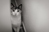 hiding place (susodediego ) Tags: bw cat chat gato gatto soe katzen lúa greatphotographers frameit olétusfotos nikond7000 vividstriking rememberthatmomentlevel1 magicmomentsinyourlife rememberthatmomentlevel2 sigma35mmf14dghsm vpul01