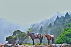 Paisaje Colombiano (ks.mojica10) Tags: paisajes de caballos landscapes los colombia bosque andes niebla con cultura belleza cordillera andina