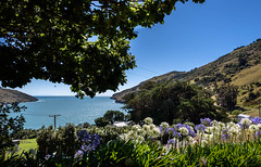 Little Akaroa Harbour (Jocey K) Tags: newzealand southisland bankspeninsula hills sky road summer scene landscape littleakaloa trees sea akaloaharbour agapanthus flowers