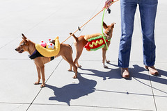 rogo&rana-5807 (angelsrescue) Tags: aau pets angels among us pet rescue alpharetta ga dog love