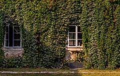 sterreich / Austria / Autriche: Schloss Hof (CBrug) Tags: building gebude outdoor schlosshof niedersterreich loweraustria gutshof meierei wand architektur architecture sterreich austria marchfeld bewuchs fenster window