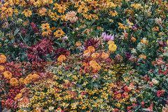 Flora Plenteous 70 (pni) Tags: flower plant multiexposure multipleexposure tripleexposure musiikkitalo musikhuset musiccentre helsingfors finland suomi pekkanikrus skrubu pni