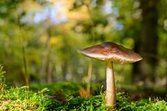 Beautiful Nature (jennifer.stahn) Tags: natur nikon pilz mushroom wald forest herbst autumn nature funghi herbsttag jennifer stahn