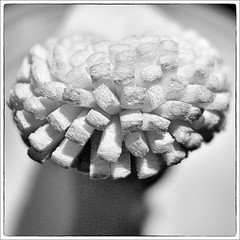 Day 283 - Bottle cleaner (Free 2 Be) Tags: sponge postaday dailyphoto 365 project365 cleaningimplement photoaday monochrome 116photosin2016 bottlebrush blackandwhite