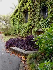 (II Ju Ele) Tags: enredadera edificio plantas naturaleza