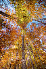 The colors of life (Michele Cioni) Tags: colors autumn tree nature wood sky green red yellow blue 2015 2016 bologna modena italy friends canon photo photography