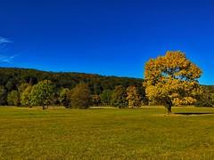 Mountainbike Tour zum Roberg im Herbst (Blende2,8) Tags: tbingen nekartal wiese bume baum