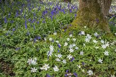 Flowers in the Forest (Kayla Stevenson) Tags: elmfieldfarm canterbury unitedkingdon