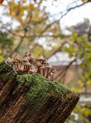 cream of mushroom... (markhortonphotography) Tags: autumn mushroom markhortonphotography woods fungi dairycottages fall colour cliveden nationaltrust berkshire fungus architecture toadstool mycenainclinata clusteredbonnet dairy bonnetcap