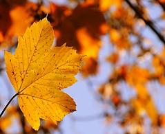 Autumn colours (sabrina. G) Tags: blatt makro bokeh baum stimmung oktober sonne licht blauerhimmel