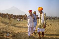 Camel trading at Pushkar (manuj mehta) Tags: desert desertpeople pushkar nomads camels india turbans canon candid streetshot