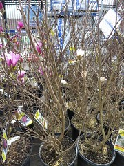 IMG_1411 (pbinder) Tags: 2016 201603 20160322 march mar tuesday tue kansas city missouri kansascity kansascitymissouri kc mo kcmo lowes plants