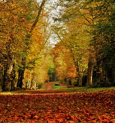 Autumn trees and leaves (Matthieu Toulemonde) Tags: autumn tring rx10 sony england trees leaves free picture