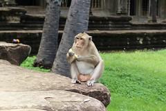 Angkor, Cambodia (Msimonin) Tags: cambodia cambodge asia travel asie siem reap angkor wat thom bayon backpack