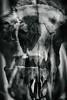 Ancestral 4 (pni) Tags: skeleton bone multiexposure multipleexposure tripleexposure museum thefinnishmuseumofnaturalhistory luonnontieteellinenkeskusmuseo naturhistoriskacentralmuseet luomus helsinki helsingfors finland suomi pekkanikrus skrubu pni museo