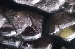 Crazed Vase (Occasionally Focused) Tags: macro takumar pentax justpentax extensiontubes takumarbayonet takumarbayonet28mm128 rawtherapee k30 singleinnovember2016