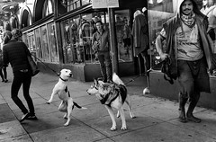 Three legged dog (feldmanrick) Tags: streetphotography street sanfrancisco thehaight dog urban out monochrome bw blackandwhite decisivemoment
