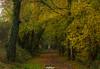 La Chapelle Sur Erdre (44) (CREE PING) Tags: 44 44240 landscape loireatlantique lachapellesurerdre nature ngc nantes naoned newlife bretagne breizh bzh canon canon7d creeping couleurs chemin podt:country=fr paysage france french feuilles forêt floral arbre automne arbres 1740mml