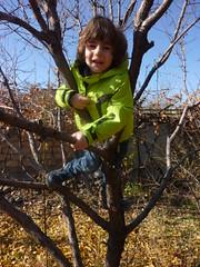 Kevork climbing a tree (RickyOcean) Tags: armenia noragavit kevork treeclimbing 111816