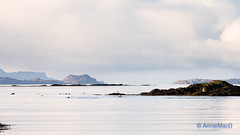 Swimming with Seals (AnnieMacD) Tags: applecross culduie scotland seals swimming training westerross