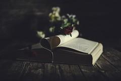 Book & Rose (armandocapochiani) Tags: romantic stilllife romantico rose rosa capochiani composition book armandocapochiani apulia beauty beautiful creation d3 flower italy nikon oldtime photography quadro taranto t