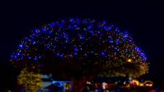 Dome Christmas Tree (GrisParr) Tags: pigeonfordge tennessee usa northamerica christmas christmastree christmaslights holidays trees nightphotography blur blue
