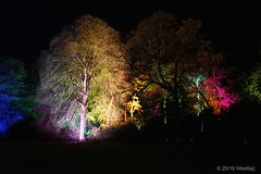 DSC04090 (Twareg) Tags: 2016 aboretum bpw enchanted forest westonbirt bathphotowalk gloucestershire england handheld night nightshot