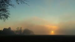 misty sunset (++sepp++) Tags: bayern deutschland dezember hochfeld lechfeld december landschaft landscape nebel fog mist sonnenuntergang sunset germany bavaria bume trees bodennebel groundfog