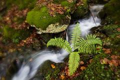 Rincones de otoo (ManuMatas) Tags: otoo manumatas agua verde irati autumn amarillo rio regata green yelow hojas manantial
