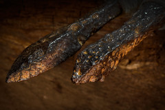 Arrowheads of the Dark Ages (Jarek Jahl) Tags: macromondays arrow arrowheads darkages vintage antique