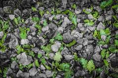 Green break (Alberto Grau) Tags: green break leaves spink