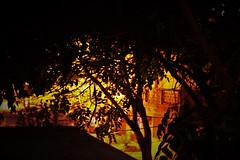 Night (rahul_rrk) Tags: tree nature night photography canon eos dslr pondicherry white town