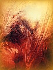 Frost On My Kitchen Window (Dave Linscheid) Tags: cold fall autumn winter butterfield mn minnesota usa