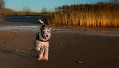 Lebensfreude part 2 (bpank2) Tags: hund elbe strand germany malaga spanien tierschutz dog