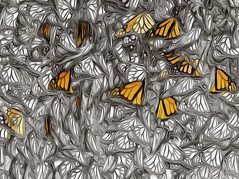 Of Yesterdays Past (Steve Corey) Tags: macro monarchbutterflys insect flyinginsects abstract stevecorey award tree