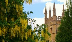 Merton College Chapel peeping through the trees (LClemence) Tags: church christ chapel oxford