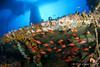 ambiente entre hierros (Jaime Franch) Tags: diving concurso formentera buceo baleares premio fotosub laplataforma presentada buceador reyezuelo vellmari tokinaatx107dxfisheyeaf1017mmf3545 selección apogonimberbis mediterráneo visemanafotografíasubmarinaformentera