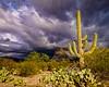 48 Desert Storm_Paule Hjertaas (paule48) Tags: clouds landscape east saguaro stormcloud arizonausa saguaronationalparkeast deserthabitat saguarocereusgiganteus