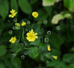 Bright (Marie Granelli) Tags: flower explore nikond3100