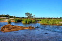 Flowing waters in the dry season (biosynthesis24) Tags: africa park water beauty cacti wonder southafrica bush sunsets adventure safari rivers vistas shrub impala hornbill krugernationalpark supreme kruger baboons