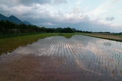 Rice reflections (Dylanfm) Tags: reflection japan rice kagoshima 7d yakushima vsco canon7d tokinaatx116prodx tokina1116f28