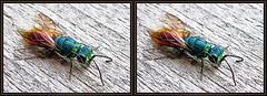 ... gold wasp ... (Mecki ----) Tags: tiere 3d natur insekten 2014 frhjahr farbenpracht goldwespe