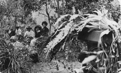 Group of people having a picnic in the bush near Maryborough, ca. 1915 (State Library of Queensland, Australia) Tags: plants bush picnic hats social queensland ferns 1915 groups picnics maryborough platycerium statelibraryofqueensland elkhorns slq