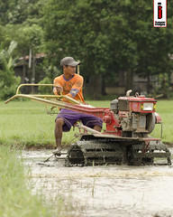Halang/Linang 06 (Soil Cultivation) (ilusyonimages) Tags: street tractor asian photography asia farm philippines farming images illusion filipino farmer ricefields handtractor ilusyon
