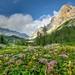 Flowers in the mountain meadow in Julian Alps